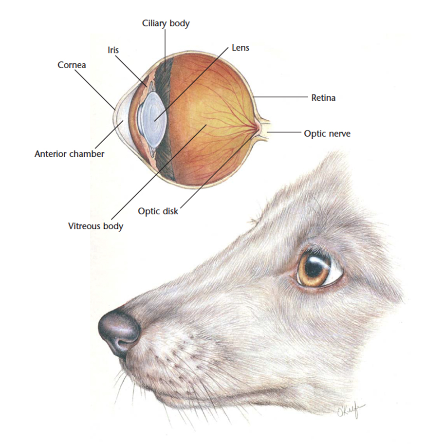 Schematic Eye Dog S - Block And Schematic Diagrams •