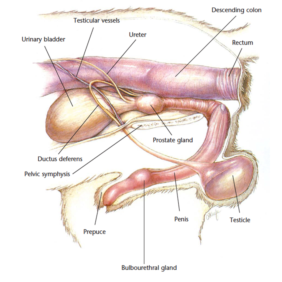 2018 Ultimate Veterinary Guide to Cat Anatomy with Images | VetCheck